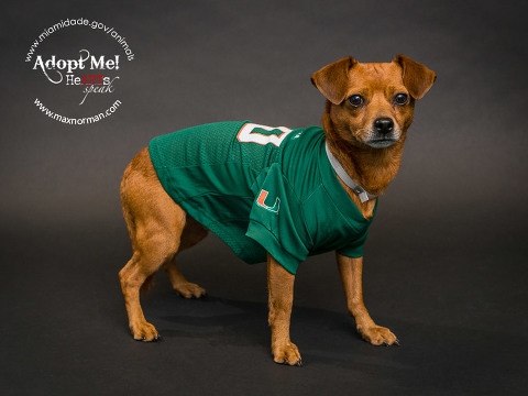 Even though Cookie has already been rescued, he still wants to show his support for the 'Canes. It's all about the U! Sorry, 'Noles fans. It will be a good game this weekend! Cookie can't wait!