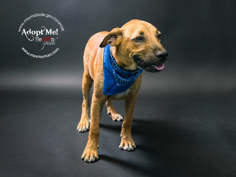 USTER - ID#A1573280 I am a male, brown Labrador Retriever mix. The shelter staff think I am about 6 months old I have been at the shelter since Nov 16, 2013.